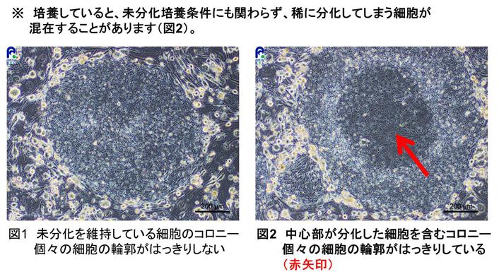 リソース(HPS)_形態写真