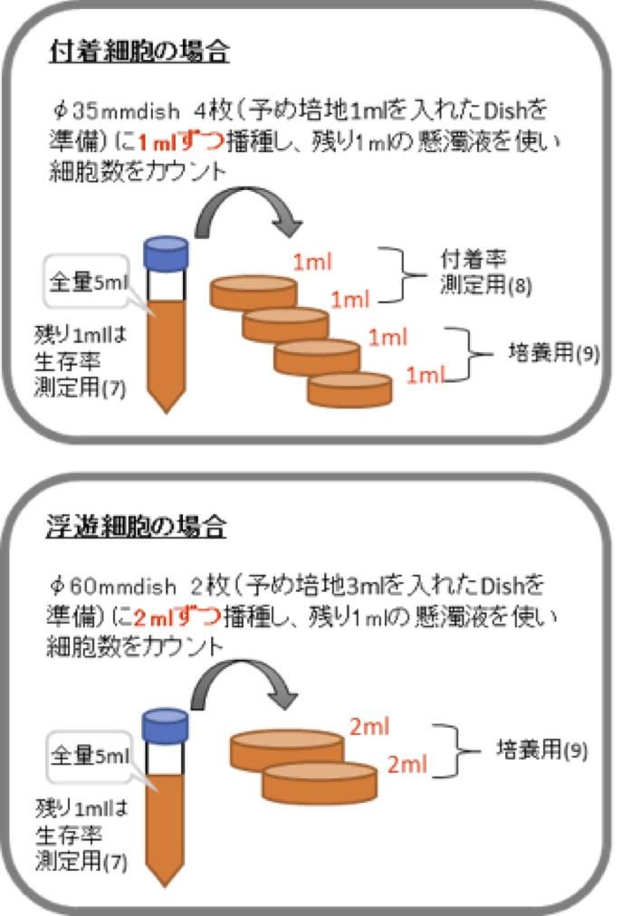 4DG生存率・付着率検査_図